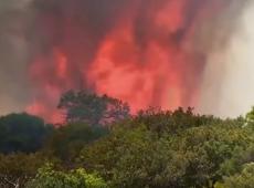 Incêndios florestais levam a estado de emergência na Austrália