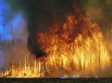 Apocalipsis: el fuego arrasa todo en Australia reduciendo a cenizas personas y vegetación