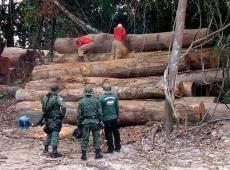 Apenas 1% das multas por desmatamento nos últimos 25 anos foram efetivamente pagas