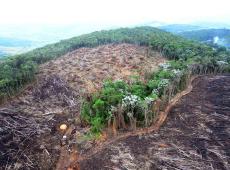 Mudanças climáticas podem ser mais letais à Floresta Amazônica do que desmatamento