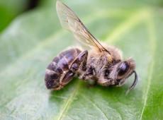 Pesquisadoras do interior de São Paulo desenvolvem técnica inovadora que pode salvar as abelhas
