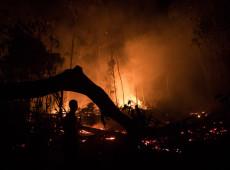 Com recorde de desmatamento, queimadas consomem árvores e animais no Amazonas