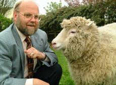Hoje na História: 1997 - Cientistas da Escócia anunciam a ovelha clonada Dolly