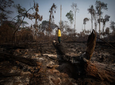 Ex-secretários dos EUA pedem criação de fundo bilionário para preservação da Amazônia
