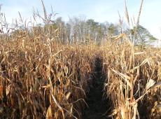 Embargo russo desestabiliza mercado europeu de alimentos e cria briga entre agricultores
