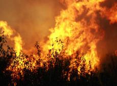 El desmantelamiento de los órganos de control y los incendios en las selvas de Brasil