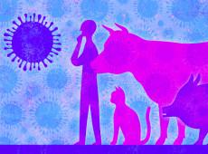 Novo vírus na China: gripe suína pode infectar humanos, mas não há motivo para pânico