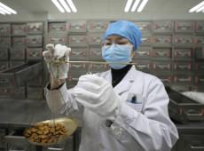 Após derrotar Covid-19, resultados positivos revalorizam medicina tradicional chinesa