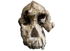 Crânio de australopiteco de 3,8 milhões de anos é descoberto na Etiópia