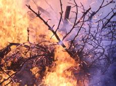Número de mortos em incêndios na Califórnia sobe para 63