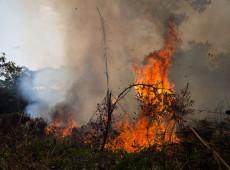 Mais de 250 ONGs repudiam ataques e acusações de Bolsonaro em discurso na ONU