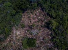 Desmatamento gera 44% dos gases do efeito estufa emitidos no Brasil