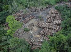 Desmatamento na Amazônia aumentou 80% em setembro, diz Imazon
