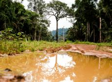 Mudança no Código Florestal pode retirar proteção de 15 milhões de hectares da Amazônia