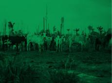 Mil candidatos a prefeito têm 308 mil cabeças de gado; maioria está na Amazônia