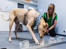 Aeroporto na Finlândia usa cães farejadores para detectar infectados pela covid-19