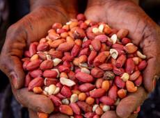 ONU: 30 milhões de pessoas a mais vão passar fome no mundo até 2030 por causa da covid