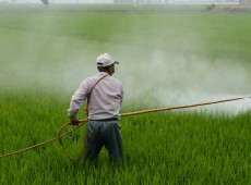 Acordo com União Europeia aumenta uso de agrotóxicos, diz pesquisadora que deixou o Brasil