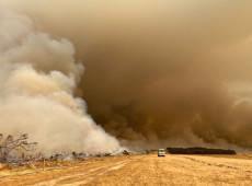 Incêndios na Austrália afetaram quase 3 bilhões de animais, afirma estudo