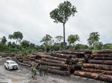 Pesquisador apresenta 56 pontos que provam que floresta amazônica é mais rentável de pé
