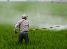 Multinacionais vendem no Brasil toneladas de agrotóxicos perigosos proibidos na Europa