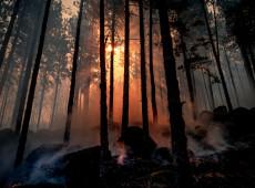 Como o desmonte de órgãos ambientais tem relação direta com o fogo nas florestas