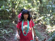 No meio do Xingu, há 10 anos mulheres Yarang coletam sementes para replantar a floresta