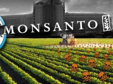 Apesar das condenações judiciais, Monsanto Bayer insiste na venda de venenos