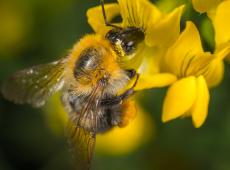 Agrotóxico mais usado no Brasil está relacionado ao desaparecimento das abelhas