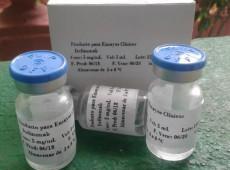 Índia aprova uso de medicamento desenvolvido em Cuba para tratar pacientes com covid-19