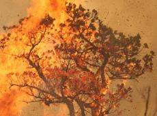 É possível forçar Bolsonaro a proteger o meio ambiente?