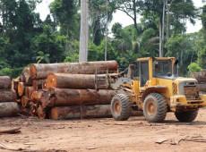 Brasil bate novo recorde e desmatamento na Amazônia alcança maior nível em 10 anos