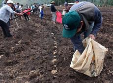 Em 1ª medida oficial, Peru aprova lei para promover cooperativas agrárias