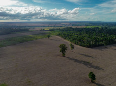 Cargill compra soja de fazendas sobrepostas a terras indígenas no Pará