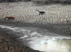 No Pantanal, animais que sobrevivem ao fogo enfrentam fome