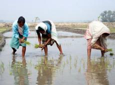 Índia: seca se expande e afeta agricultura e reservas de água em quase metade do país