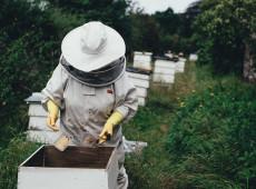 Saiba o que você pode fazer para impedir extinção das abelhas e garantir a segurança alimentar do planeta