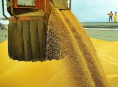 Brutal ampliação das áreas de plantio de soja não deixa margem para cultivo de alimentos