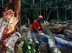 Aumento do desmatamento pode gerar bloqueios de investimentos no Brasil