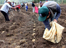 8 pontos para entender a nova reforma agrária proposta pelo presidente Pedro Castillo no Peru