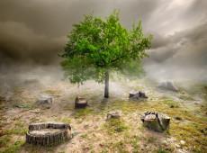 O mundo falhou em todos os objetivos para parar a destruição da natureza, diz ONU
