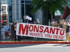 Parlamento francês proíbe cultivo de milho transgênico da Monsanto