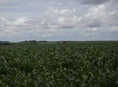 Agrotóxicos podem ser a causa de casos de câncer e malformação no Brasil?