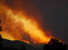 Primeiro-ministro grego admite falha no combate aos incêndios florestais