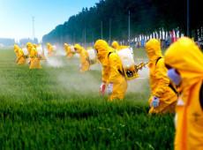 Após México proibir glifosato, outros países do continente limitam uso do herbicida