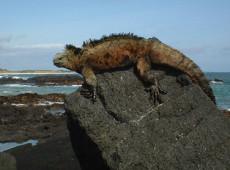 Hoje na História: 1832 - Ilhas Galápagos são anexadas ao Equador
